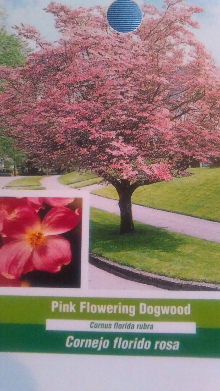 Pink Flowering Dogwood Tree 5 Gallon New Dog Wood Plants Large Etsy