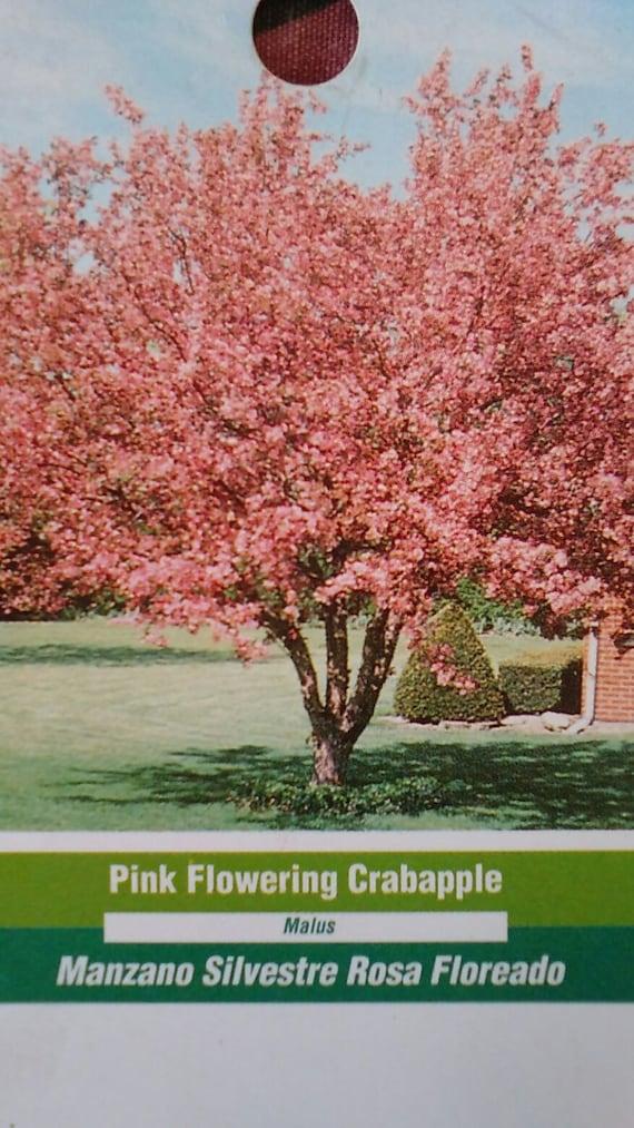Pink Flowering Crabapple 5 Gallon Tree Flower New Plants Plant Etsy
