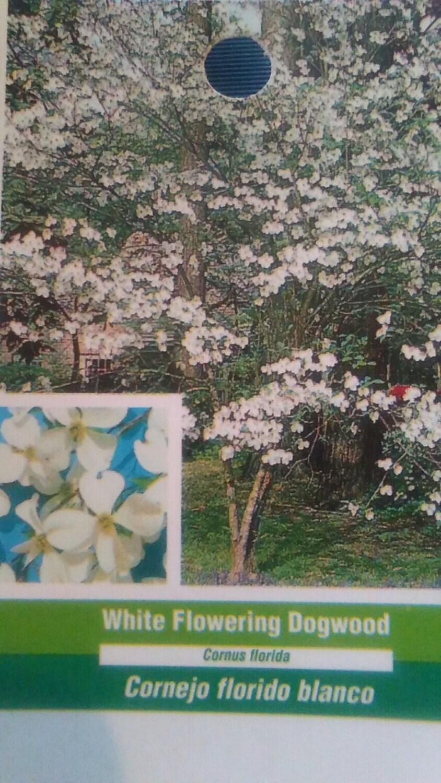 White Flowering Dogwood Tree 5 Gallon New Dog Wood Plants Etsy