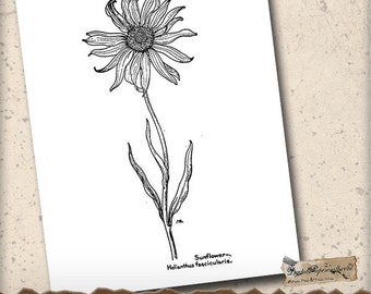Vintage Art Coloring Page - Sunflower 5 Printable Coloring Page - Clip Art - Scrapbooking Tag & Journal Paper Crafts - Adult Coloring Page