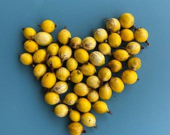 Blackberry Jam Plant SEEDS/Randia formosa/Rare Fruit Seeds/Maui Seeds/Edible Landscaping/Container Garden/Easy to Grow/Home Garden/Edible