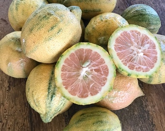 Maui PINK Lemon/SEEDS/Maui Seeds/Variegated Lemon/Maui Seeds/Hawaii grown Fruit SEEDS/Maui Grown Fruit/Home Garden/Fruit Seeds/