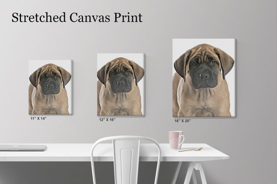 english mastiff stuff