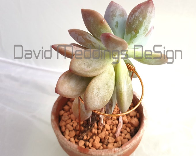 Plant circular ring support  holders in lacquered Copper wire 5x sets for indoor gardening Succulent terrarium furniture