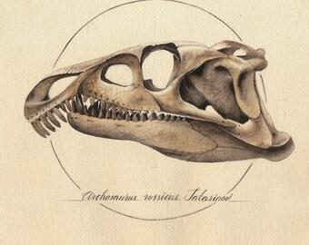 Archosaurus Skull. Art print