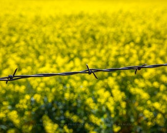 Barbed Wire Print, Fence Photography, Country Art, Country Print, Barbed Wire, Rural Picture, Yellow Landscape, Canola Fields, Fences