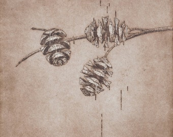 """Title: """"Cones - modified"""" Fine art etching and aquatint of 3 cones. Conceptual depiction of nature, detailed line and cross hatching print."""