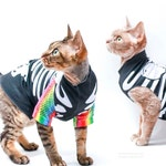Cat Skeleton Costume with rainbow fishnet RAVE sleeves,  Halloween.  Sphynx Cat Skeleton Costume for your cat.