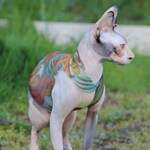 Sphynx Cat Clothes, Japanese Dragon Tattcat™ , Tattoo Sweaters, Dog Clothes,now you can get tattoo sleeves for your cat