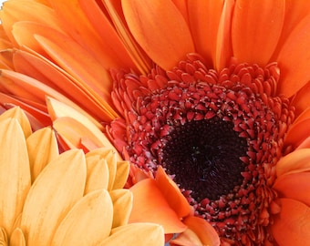 Gerbera daisy, orange and yellow flower, summer, photography, print, Connecticut, garden, nature, office, hotel, macro