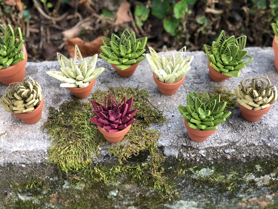 Set of 3 Assorted Mini Quilled Paper Succulent Desk or Window Decoration Cactus