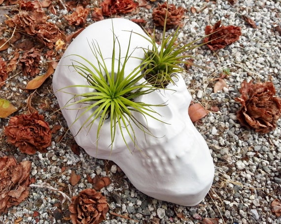Skull Planter, air plant holder, tabletop human skull planter, skull gift, anatomical decor, spooky gift
