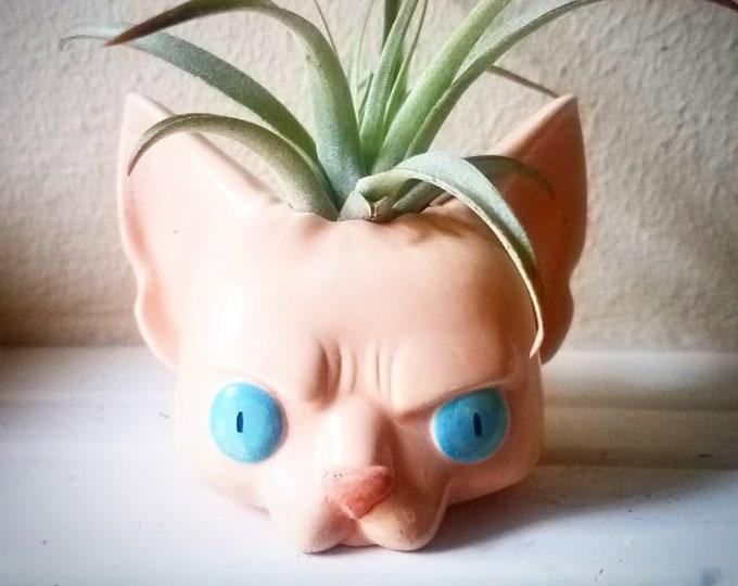 Cat planter, air plant holder, Sphynx gift, hairless cat, custom cat gift