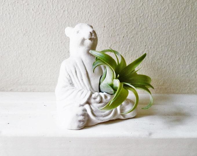 Squirrel Buddha, squirrel gift, Zen animal planter, meditating Buddha planter, air plant holder, meditation