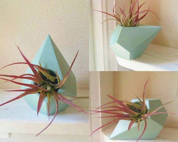 Geometric air plant holder, planter gift set, desk decor, with air plant, teardrop, triangle, office decor, gift for boss