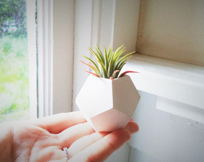 Small geometric air plant holder, wedding favors, simple planter, small plant favors, unique favors, love grows, modern favors
