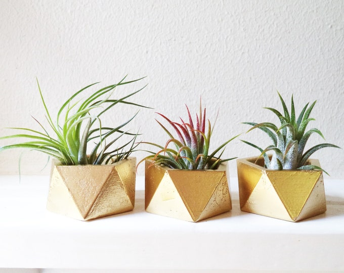 100 small plant wedding favors with plants, sustainable favors, earth friendly, modern favors, air plant holder, geometric planter