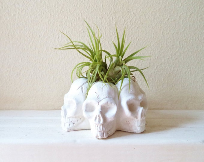 Halloween skull planter, air plant holder, desk accessory, skull decor, Halloween desk decor, Halloween gift