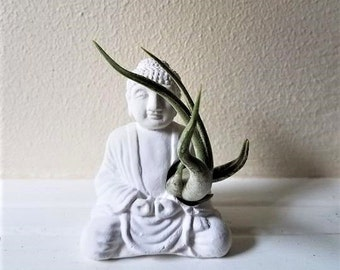 Buddha statue air plant holder, Buddha planter, small air plant holder, mini planter