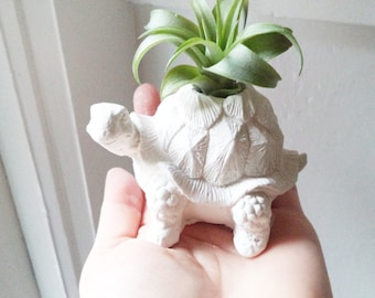 Turtle tortoise planter, air plant holder, tortoise, long life, good luck gift, geometric planter with plant