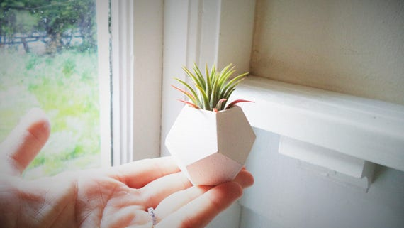 Geometric mini planter, air plant holder, dodecahedron planter