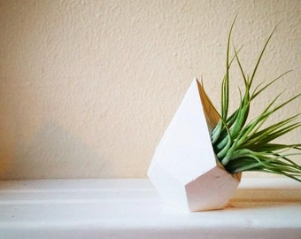 Geometric teardrop air plant holder, mini planter with plant, naturalist gift, faceted container