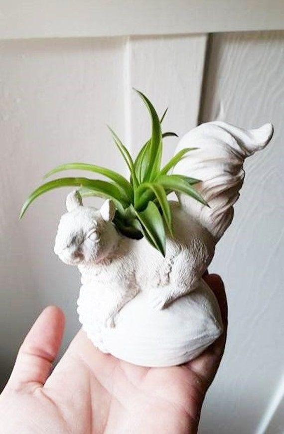 Squirrel planter, squirrel gift, busy tail squirrel, desk planter, woodsy decor