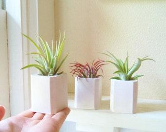 Geometric mini planter, air plant holder, tiny square planter, plant wedding favors
