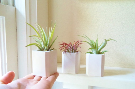 Geometric mini planter, air plant holder, tiny square planter, plant wedding favors