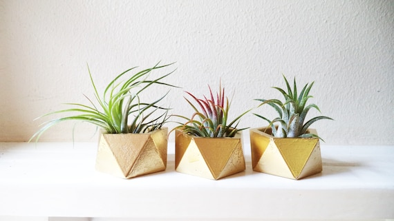 Bulk wedding favor planters, geometric, sustainable favors, earth friendly, modern favors, air plant holder, geometric planter