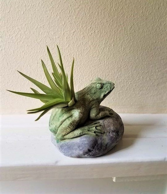 Frog planter, frog air plant holder, frog gift, toad, good luck gift
