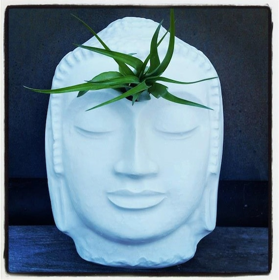 Buddha head planter, air plant holder, wall planter with plant, eye of the Buddha, 3rd eye, third eye, resting Buddha