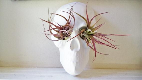 Skull Planter, air plant holder, tabletop human skull planter centerpiece, skull gift, anatomy decor