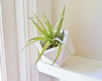 Geometric planter, modern planter, air plant holder, 3 inch geometric planter