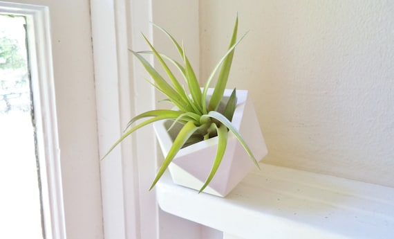 Geometric planter, air plant holder with air plant, angled plant holder, small desk planter, small plant gift, plant favors