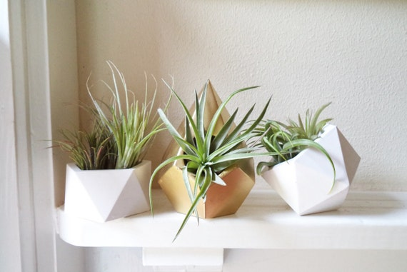 Geometric planters  gift set, air plant holders, with air plants, teardrop, icosahedron