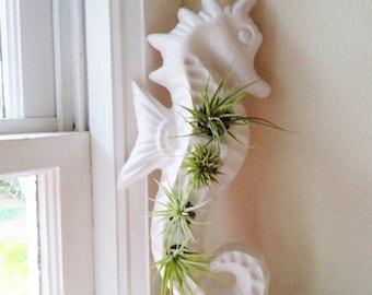 Seahorse vertical wall planter, vertical planter, nautical decor, air plant holder, indoor garden
