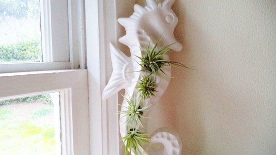Seahorse wall hanging statue, wall planter, vertical planter, nautical decor, air plant holder, indoor garden
