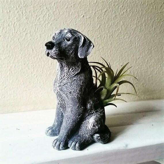 Labrador air plant holder, black lab, dog lover gift, pug, terrier