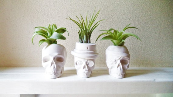 Skull mini planters, set of small planters, skull air plant holder,  dapper skull, pirate skull, monocle, mustache, stocking stuffer