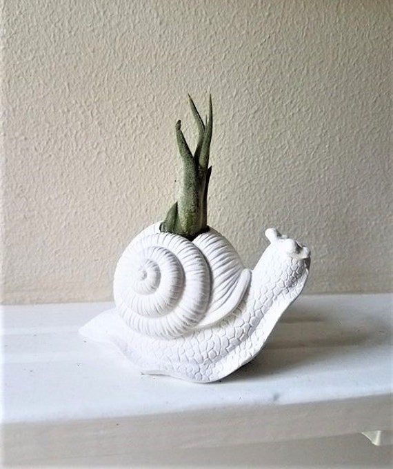 Snail planter, air plant holder, snail sculpture, desk planter, paper weight, gift for gardener