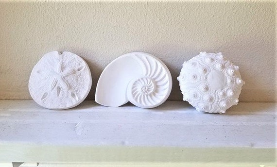 Sea shell wall sculptures, sea urchin sculpture, nautilus shell, sand dollar, nautical decor