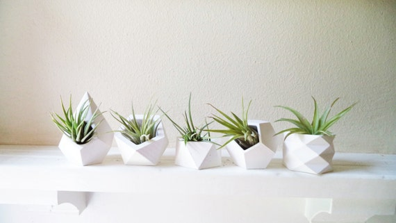 Small plant wedding favors, green favors, sustainable, Geometric planters, set of air plant holders with plants