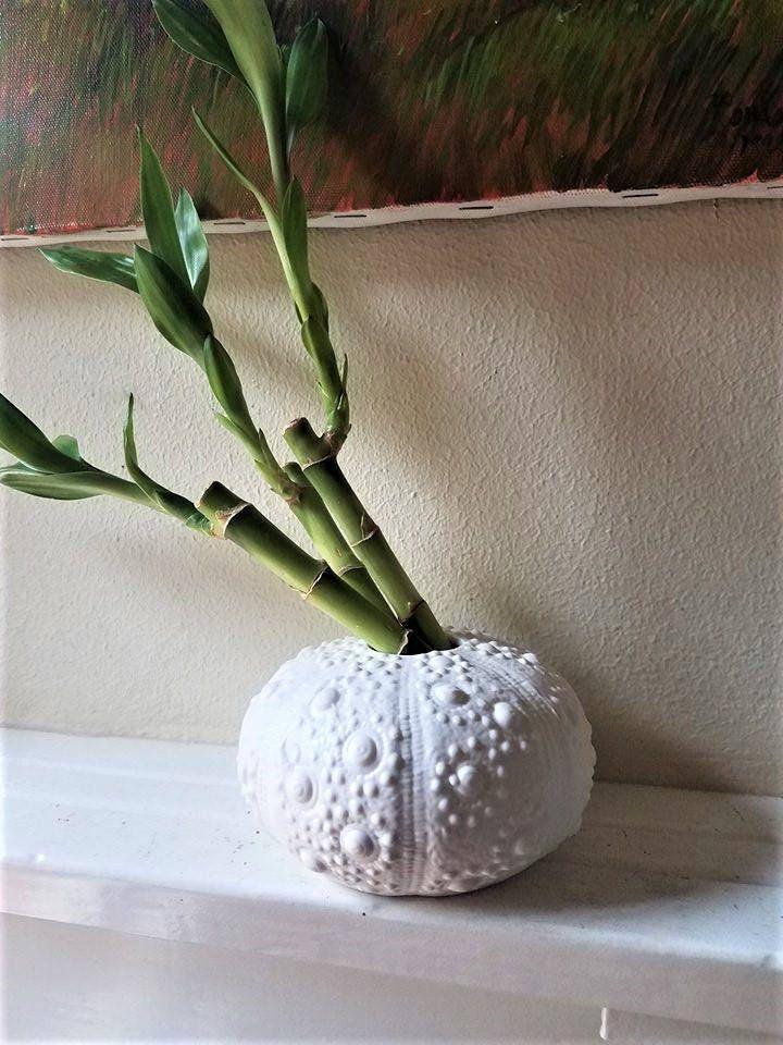 Sea Urchin Vase Ceramic Sea Urchin Shell Sea Shell Nautical Decor