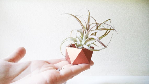 Green sustainable earth friendly Wedding favors, mini planters, geometric air plant holder, copper rose gold