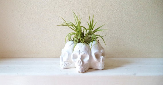 Skull mini planter, air plant holder, desk accessory, skull decor