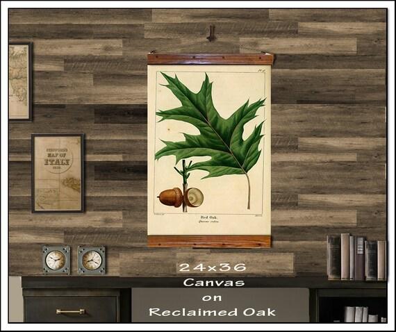 red oak hanging botanical print antique pull down chart etsy