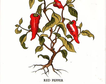 Hot Red Cayenne Peppers Botanical Illustration  printed on a cork backed ceramic tile trivet