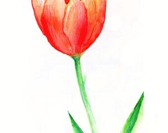 Sunset Tulip - art print - 5 x 7