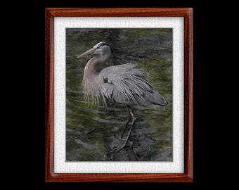 Great Blue Heron Print - 8x10 or 11x14 Great Blue Heron Photograph - Bird Photograph - Bird Print - Great Blue Print- Heron Art - (P12)